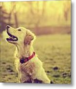Dog In The Park Metal Print by Jelena Jovanovic