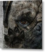 Dog In The Window Metal Print