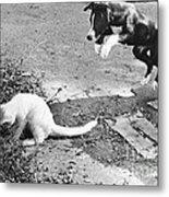 Dog Jumping On An Unsuspecting Kitten Metal Print