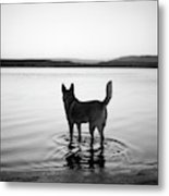 Dog Looking Over Abiquiu Reservior Metal Print