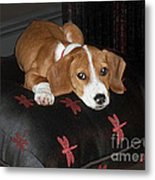 Dog - Mr. Oliver Relaxing Metal Print