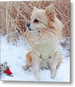 Dog Playing In Snow Metal Print