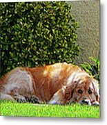 Dog Relaxing Metal Print