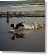 Dog Running Metal Print by John Magnet Bell