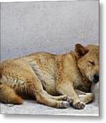 Dog Sleeping Metal Print
