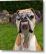 Dog Wearing Sunglass Metal Print by Stephanie McDowell