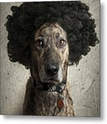 Dog With A Crazy Hairdo Metal Print