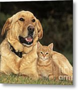 Dog With Kitten Metal Print by Rolf Kopfle