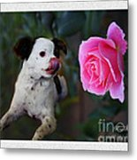 Dog With Pink Rose Metal Print