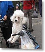 Doggie In The Basket Metal Print