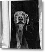 Doggie In The Window Metal Print
