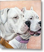 Dogo Argentino Metal Print