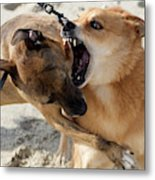 Dogs Fight On The Beach In Emerald Metal Print
