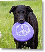 Dogs For Peace Metal Print