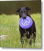 Dogs For Peace Too Metal Print