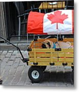 Dog's Life In Canada Metal Print