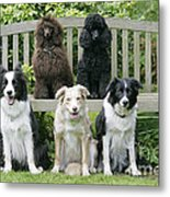 Dogs Sitting On Bench Metal Print