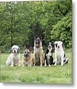 Dogs, Various Breeds In A Line Metal Print