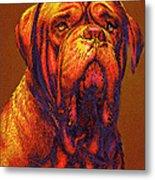 Dogue De Bordeaux Metal Print