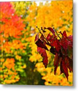 Dogwood And Fall Colors Metal Print