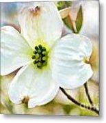 Dogwood Blossom - Digital Paint I  Metal Print