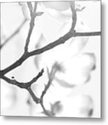 Dogwood Blossoms Black And White Metal Print