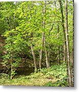 Dogwood Canyon Metal Print