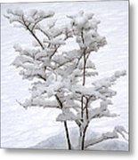 Dogwood In Snow Metal Print
