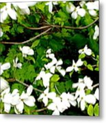 Dogwood In The Wind Metal Print