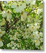 Dogwood Kissed By The Sun Metal Print