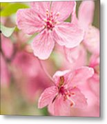 Dogwood Tree Bloom Close Up In Spring Metal Print