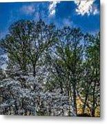 Dogwoods And Dramatic Sky Metal Print