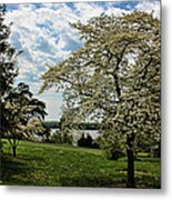 Dogwoods In Summer Metal Print