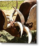 Doing The Watusi Metal Print