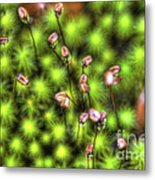 Dolly Sods Ground Cover Metal Print