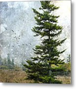 Dolly Sods Pine Metal Print