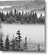 Dolly Sods Wilderness D300_10363_bw Metal Print