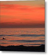Dolphin At Cape Hatteras Metal Print
