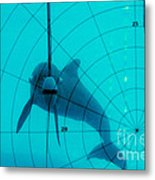 Dolphin Experiment Metal Print