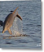 Dolphin I Mlo Metal Print