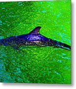 Dolphin In The Shallows Metal Print