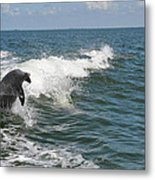 Dolphin In Waves Metal Print
