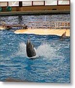 Dolphin Show - National Aquarium In Baltimore Md - 1212102 Metal Print