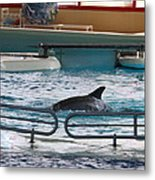 Dolphin Show - National Aquarium In Baltimore Md - 1212115 Metal Print by DC Photographer