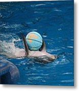 Dolphin Show - National Aquarium In Baltimore Md - 1212155 Metal Print by DC Photographer