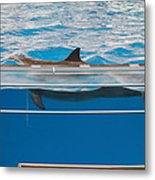 Dolphin Show - National Aquarium In Baltimore Md - 1212173 Metal Print