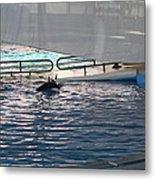 Dolphin Show - National Aquarium In Baltimore Md - 121218 Metal Print