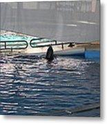 Dolphin Show - National Aquarium In Baltimore Md - 121219 Metal Print