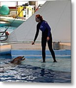 Dolphin Show - National Aquarium In Baltimore Md - 1212196 Metal Print by DC Photographer