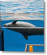 Dolphin Show - National Aquarium In Baltimore Md - 1212198 Metal Print